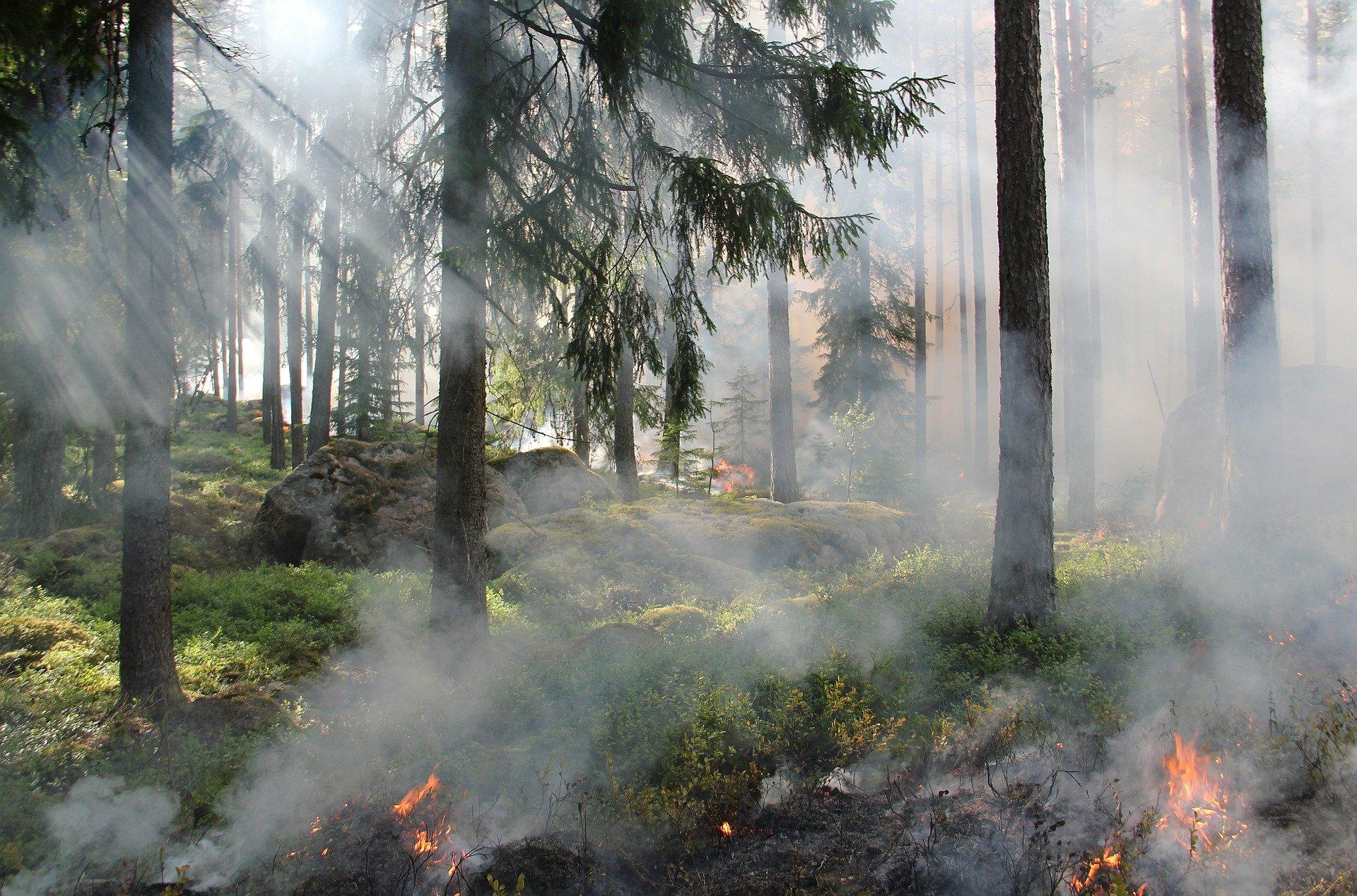 שריפה ביער